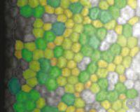 Polygonale Formen werden in verschiedenen Farben dargestellt.